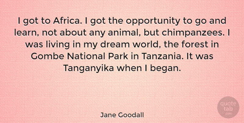 Jane Goodall Quote About Dream, Opportunity, Animal: I Got To Africa I...