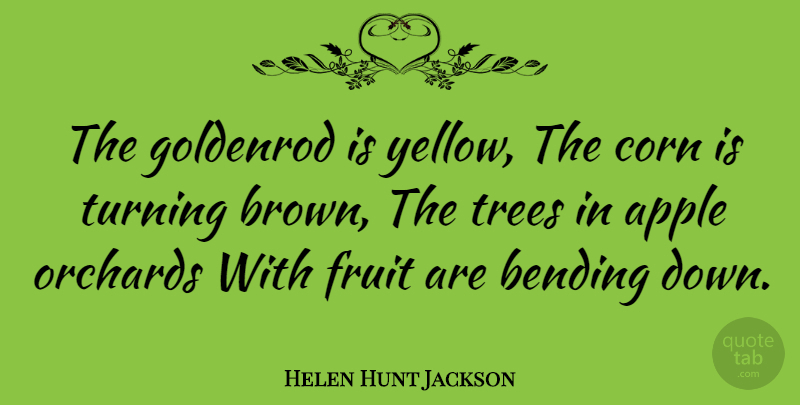 Helen Hunt Jackson Quote About Yellow, Apples, Bending Down: The Goldenrod Is Yellow The...