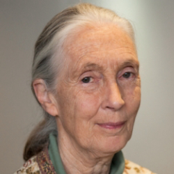 Author Jane Goodall