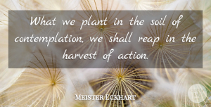 Meister Eckhart Quote About Excellence, Soil, Action: What We Plant In The...