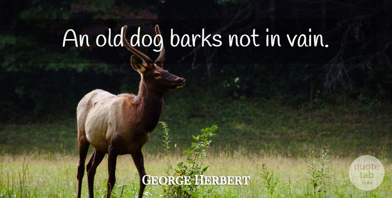 George Herbert: An old dog barks not in vain. | QuoteTab
