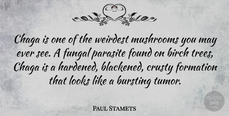 Paul Stamets Quote About Mushrooms, Tree, May: Chaga Is One Of The...