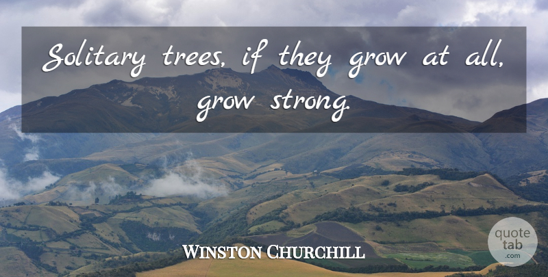 Winston Churchill Quote About Sad, Being Strong, Lonely: Solitary Trees If They Grow...