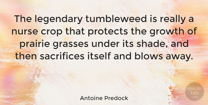 Antoine Predock Quote About Sacrifice, Blow, Nurse: The Legendary Tumbleweed Is Really...